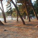 Plaža med drevesi