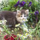 Arwen med rožami