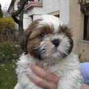 To je moj pes Pepi!