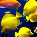 Poletje,morske živali,