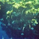potapljanje na koralnem grebenu