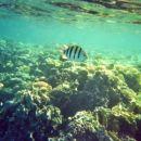 potapljanje na koralnem grebenu4