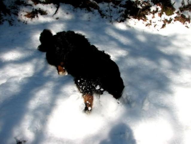 Tako sem pogrešal sneg, da se bom kar zakopal vanj!