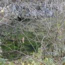 izvir Ljubljanice