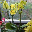 kupile z mami v Ocean orchids jan 08