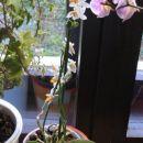 nova pridobitev iz ocean orchids jan 08