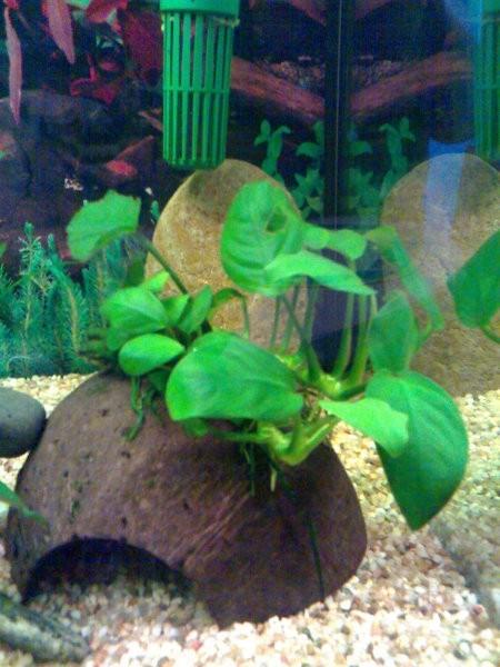 Akvarij - foto