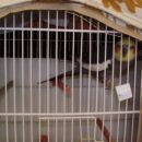 To je od najdva papagaj Kuki.