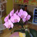 orhideja moje hčerke, pohvaljena Nuša !