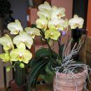 Ponovno cveti, moja odštekanka...
