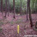 Planina šuma