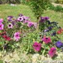 Cvijeće iz Mahale