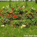 Cvijeće iz dvorišta Srednjoškolskog centra u Kalesiji