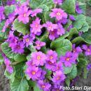 Cvijeće iz Mahale kod Kalesije