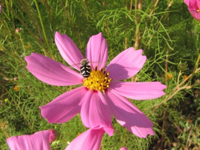 Žuželke, makro - foto