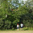 Ludbreg,Hrvaška 08 pristanek na drevesu