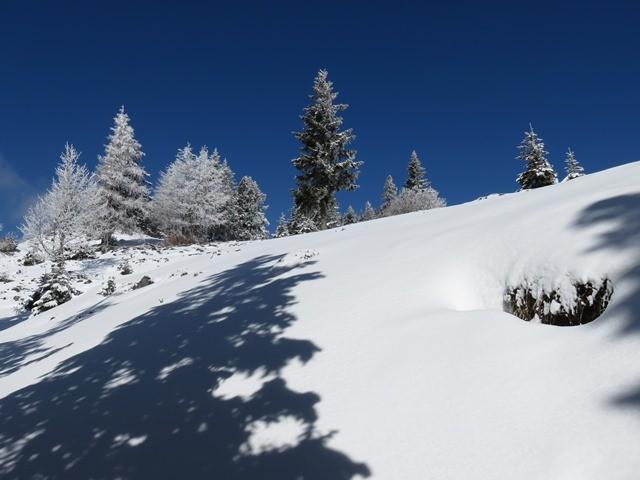 Velika planina - zimski pohod (6.3.2021) - foto