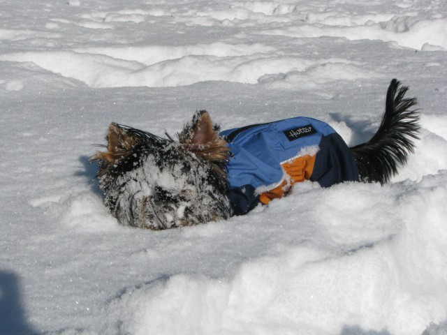Zimske radosti 26.11 - foto