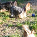 Trudi, Tara in Romi... seveda z žogico :)