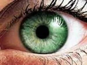 zelenooka